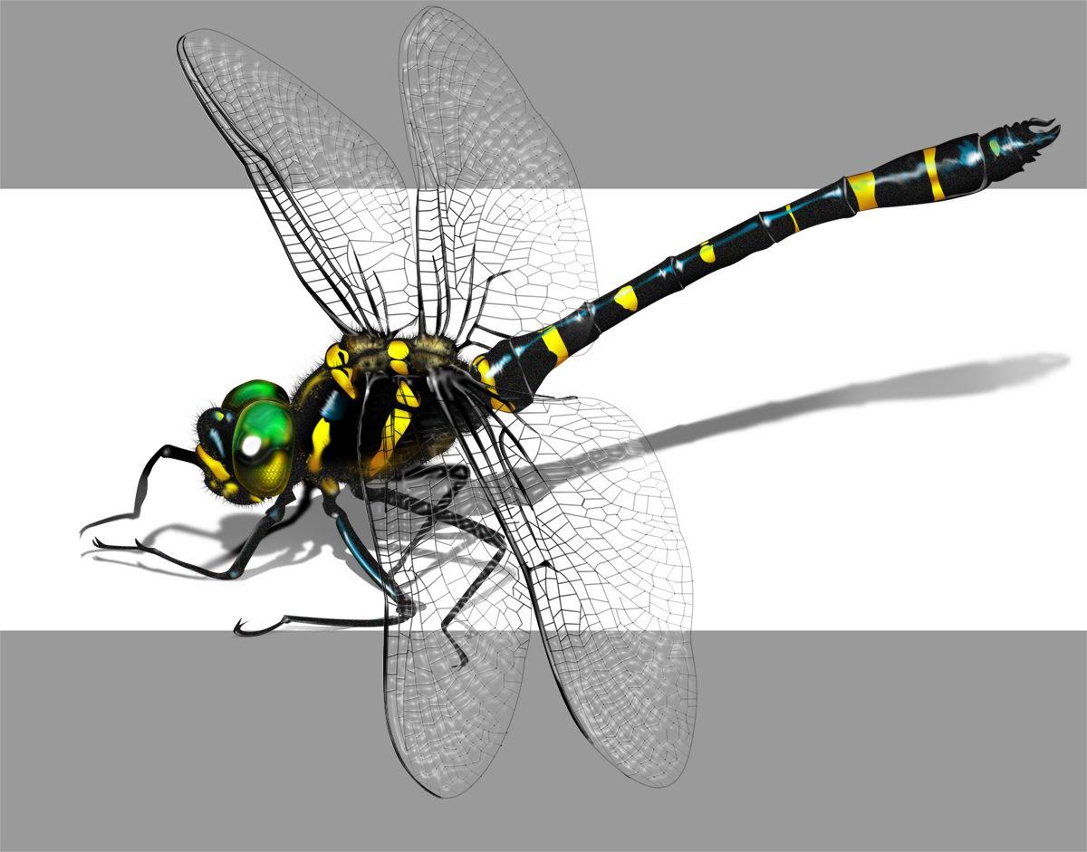 PS实战动物绘制教程,手把手教你Photoshop绘制逼真蜻蜓
