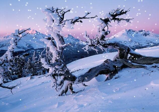 3ds max实战动画教程,教你用粒子制作雪景动画